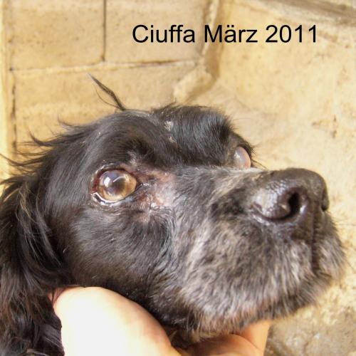 ciuffa02.jpg
