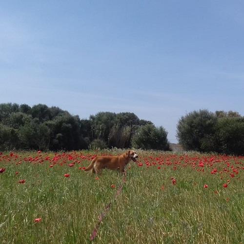 oliver14.jpg