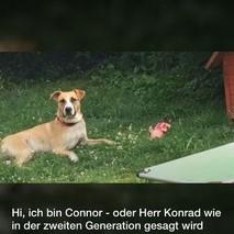 connor02.jpg