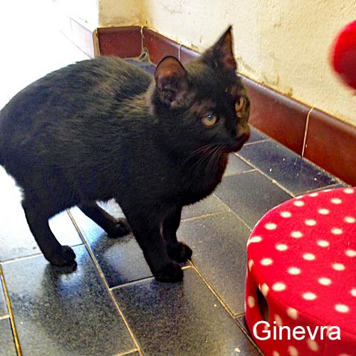 Ginevra_003.jpg