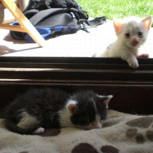 kitten-jenny-1.jpg