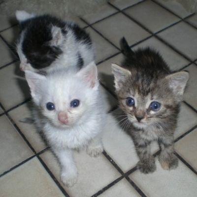 kitten-jenny-10.jpg