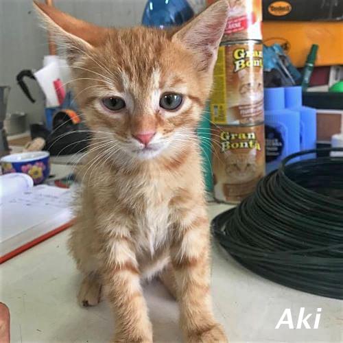 kitten_002.jpg
