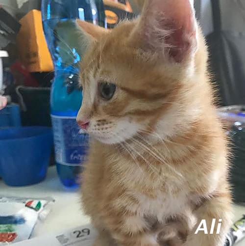 kitten_004.jpg