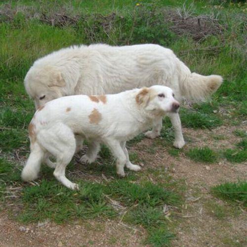 hund6.jpg