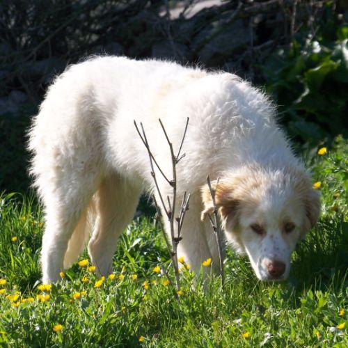 hund9.jpg