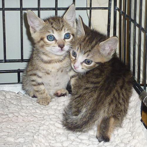 kitten_s.teresa1.jpg