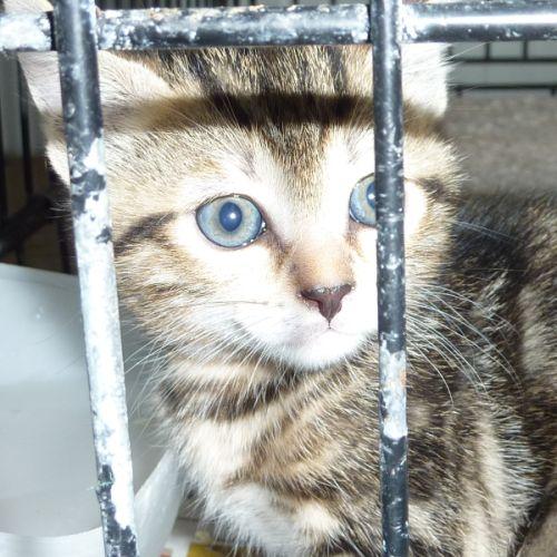 kitten_s.teresa2.jpg