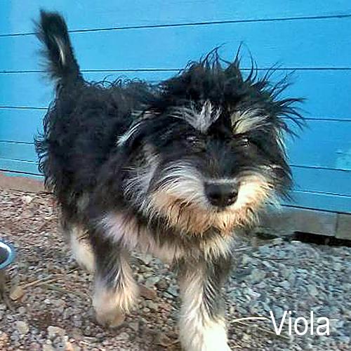viola_001.jpg