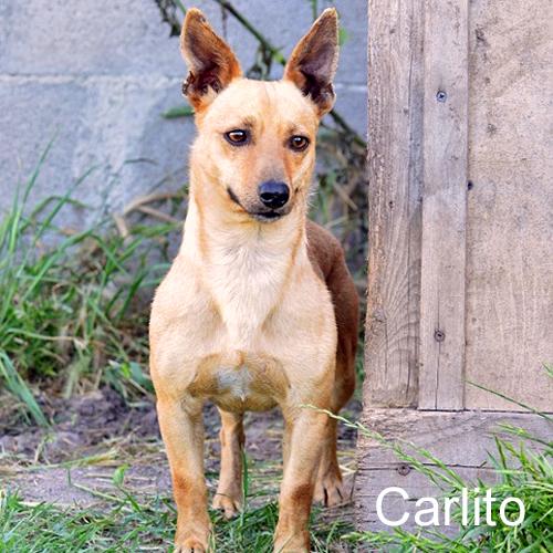 carlito_001.jpg