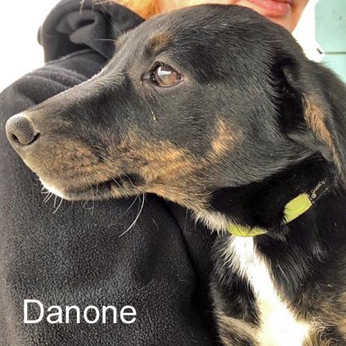 danone_001.jpg