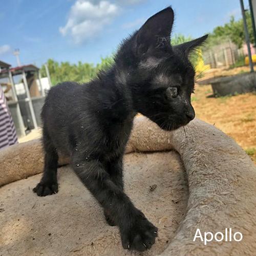 apollo_001.jpg