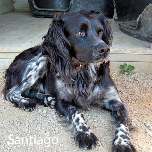 santiago_001.jpg