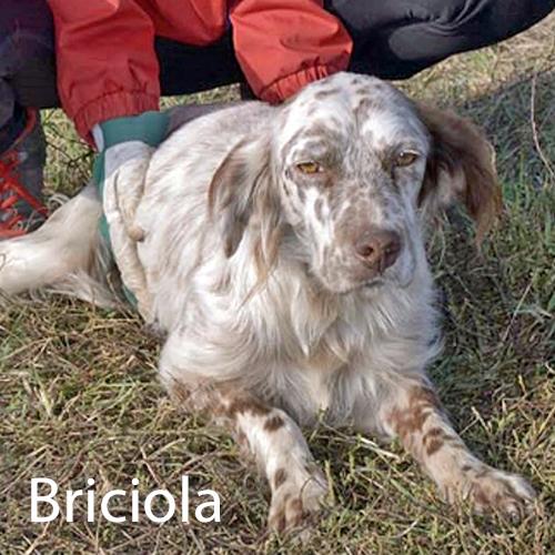 briciola_001.jpg