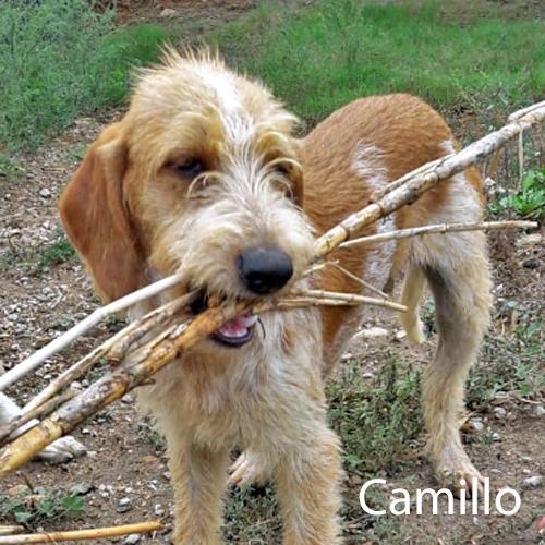 camillo_001.jpg
