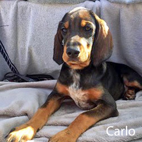 carlo_001.jpg