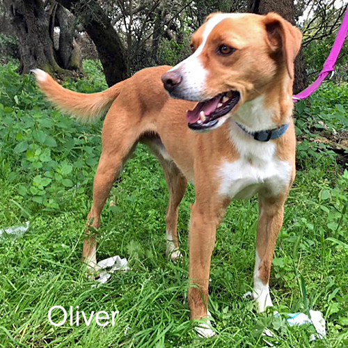 oliver_001.jpg