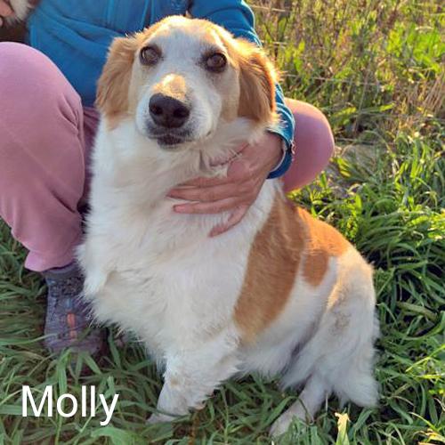molly_001.jpg