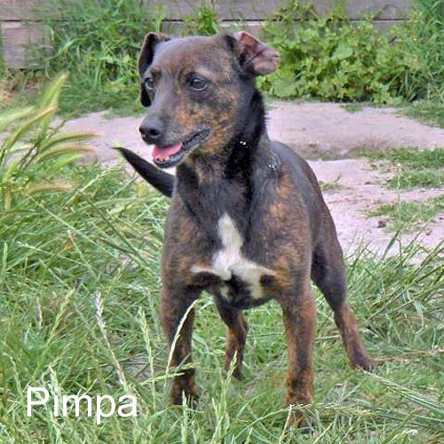 pimpa_001.jpg