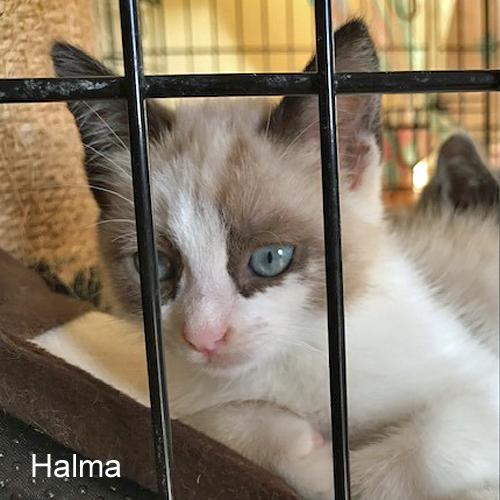 halma_001.jpg