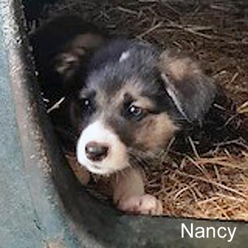 nancy_001.jpg
