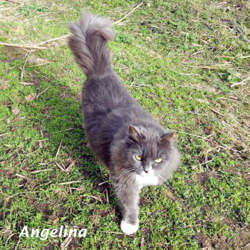 angelina_001.jpg