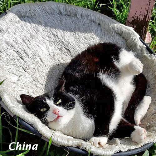 china_001.jpg