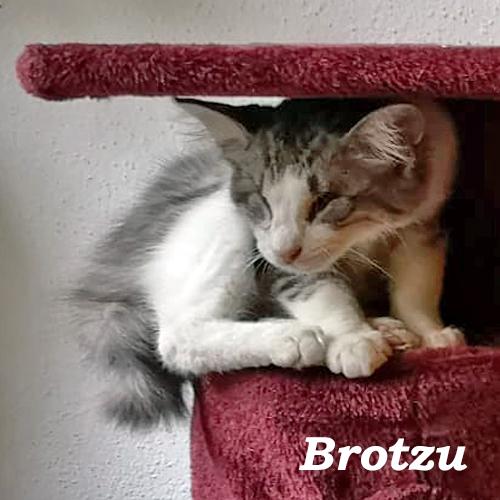 brotzu_002.jpg