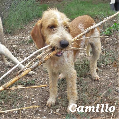 camillo07.jpg