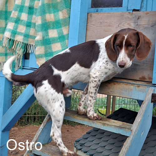 ostro_001.jpg
