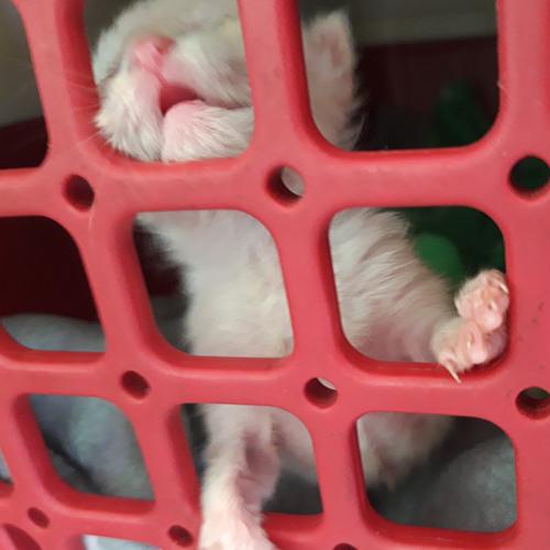 kitten_003.jpg