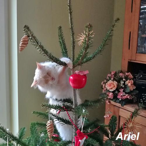 ariel_001.jpg