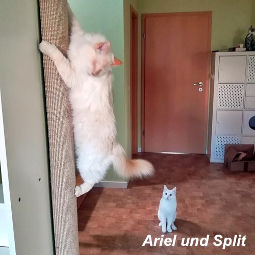 ariel_002.jpg