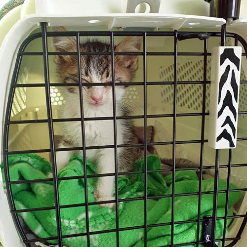 kitten_007.jpg