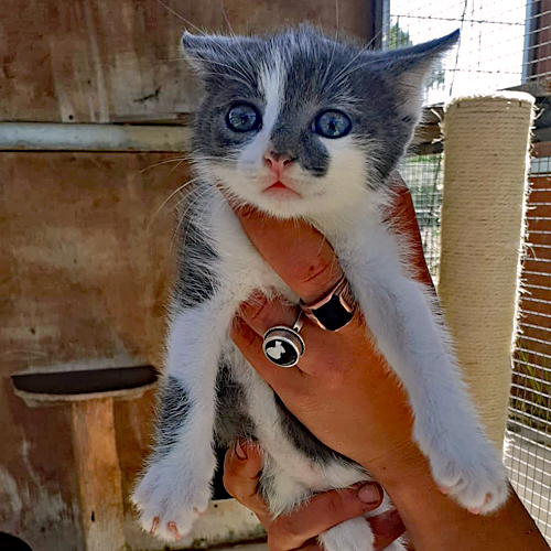 kitten_013.jpg