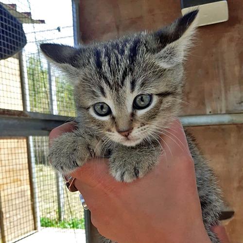 kitten_014.jpg