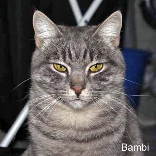 bambi_001.jpg