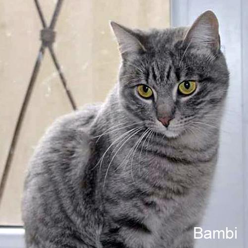 bambi_002.jpg