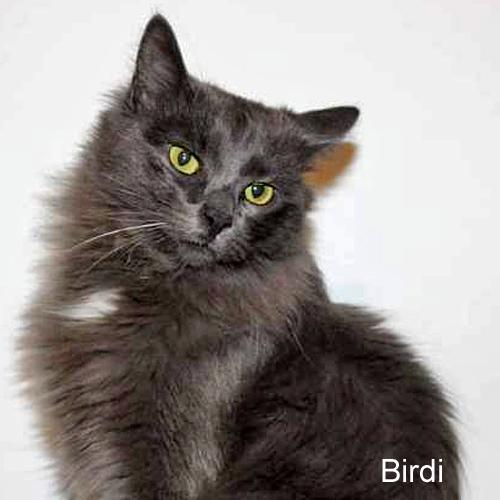 birdi_001.jpg