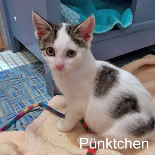 kitten_005.jpg