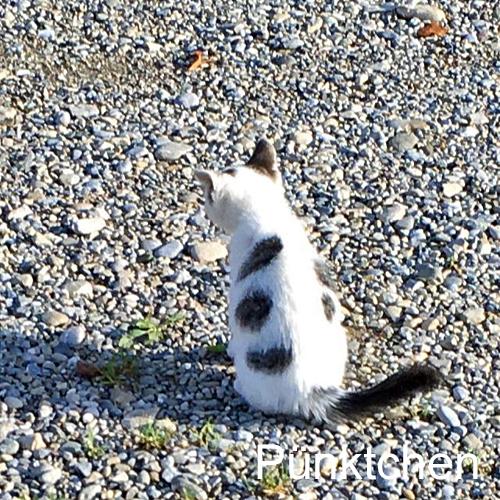 kitten_006.jpg