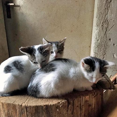 kitten_008.jpg