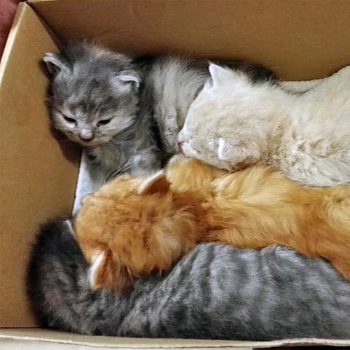 kittenhilfe_004.jpg
