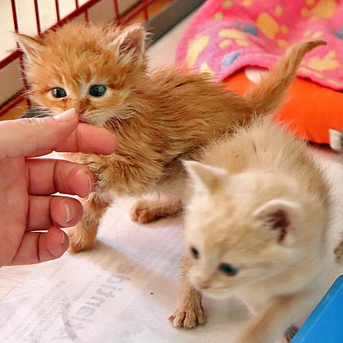 kittenstreu_002.jpg