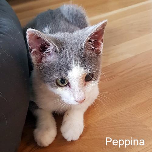 peppina_003.jpg