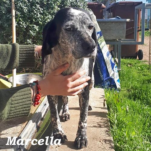 marcella_001.jpg