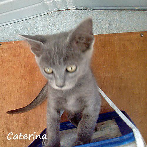 caterina_001.jpg