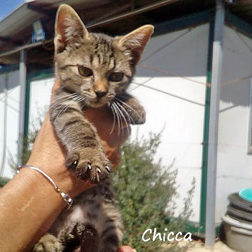 chicca_001.jpg