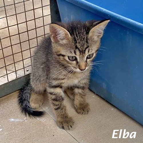 kitten_001.jpg