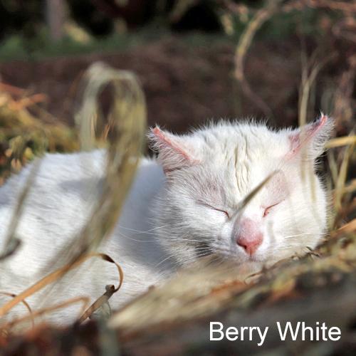 berry_white_001.jpg